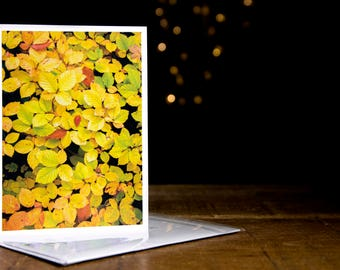 Autumn Beech Greetings Cards