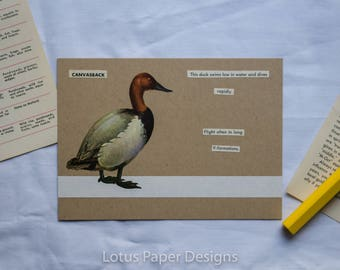 Handmade Blank Greeting Card (Flat A6) - Canvasback - Golden Guide to BIRDS
