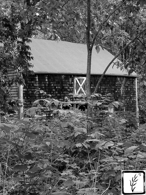 B&W #Photograph, #barn, #country, #colonial, #pine, photo print, fine art, wall art, home decor, New York, Long Island, haiku, village