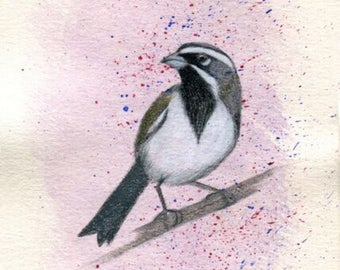 Black Throated Sparrow Bird - Original Ink Watercolor Painting Drawing - 4.5 x 7