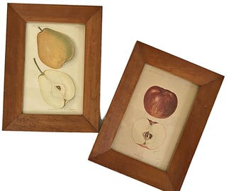 Pair of Antique Fruit Prints Botanical Prints Rustic Wood Framed Farmhouse Chic Kitchen Art