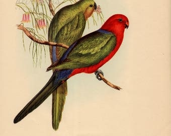 BIRDS IN COLOR, John Gould lithos ca 1950