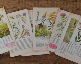 Vintage Floral Flower Botanical Ephemera Booklet Illustration Pages Pictures - Lot of 10