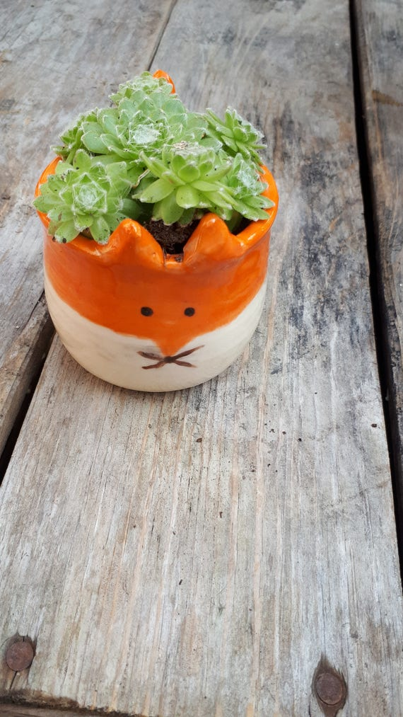 Pottery Fox succulent   planter small bowl cup catch all  boho perfect for airplants