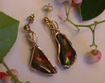Ammolite Earrings Gold Filled Wire Utah Gem Fossil Statement Earrings Statement Jewelry Wire Wrapped Dangle Earrings 14 K Gold Posts 756