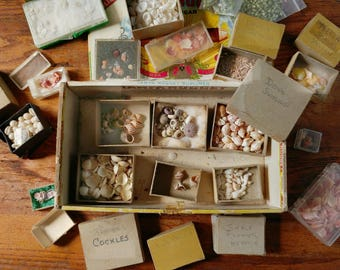 Seashell collection, miniature seashells, instant collection, Sailors Valentine supplies