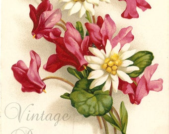 Pink Cyclamen & Edelweiss Flowers Antique French Postcard, Chromolithograph Flower Bouquet Post Card from Vintage Paper Attic