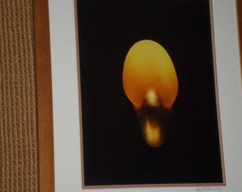 Signed Numbered Photo RUBY NAUTILAUS Against Black Background/In Wood Frame