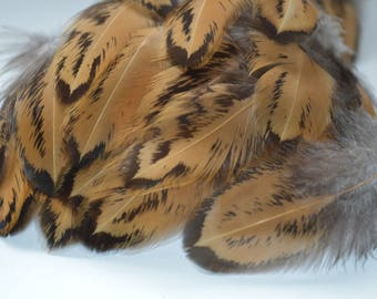 Feathers Black and Gold Light Speckled Ginger