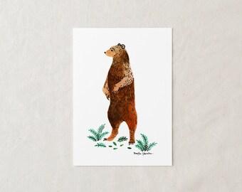 Grizzly Bear - Art Print