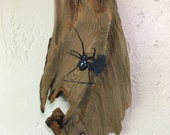 Black Widow Spider on Driftwood Painting by David Semones 8-13-17