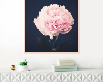 Peony Print, Pink and Navy Peonies Wall Art, Dark Still Life Peonies Wall Art, Large Minimalist Art, Peony Photography, Fine Giclee Print