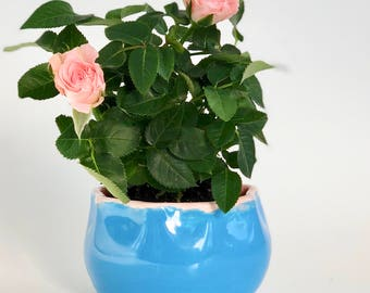 Blue and Pink Bowl