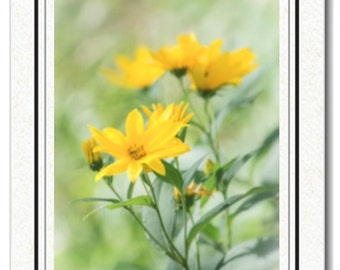 Yellow Flowers Photography Card - Photography Greeting Cards - Wildflower Greeting Card - Photography Greeting Card