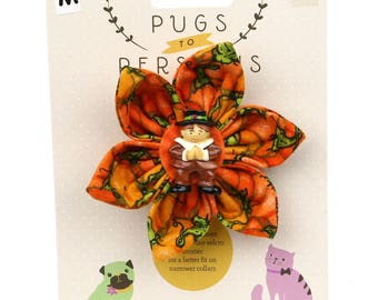 Autumn Dog Bow - Pilgrim Boy on Pumpkins - Flower - Collar Blossom - Medium Size