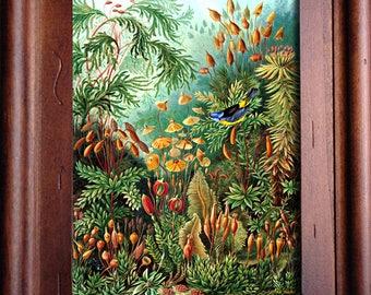 Framed Vintage Print/Plants and Bluebird Illustration