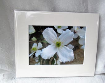 """White Clematis photography print flower picture 8x10"""" PH010"""