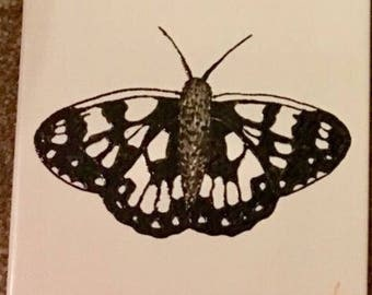 Ceramic Tile Painting, Original. Marbled White, black and white bug creepie crawley insect plaque butterfly butterflies