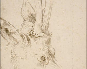 Poster, Many Sizes Available; Albrecht Durer Head Of A Roebuck