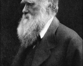 40% OFF SALE Poster, Many Sizes Available; Charles Darwin P3 Julia Margaret Cameron