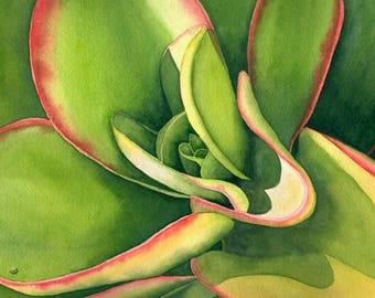 Watercolor painting..WATER SAVER...succulent...giclee