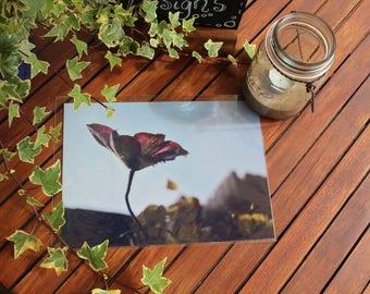 A4 Photography prints