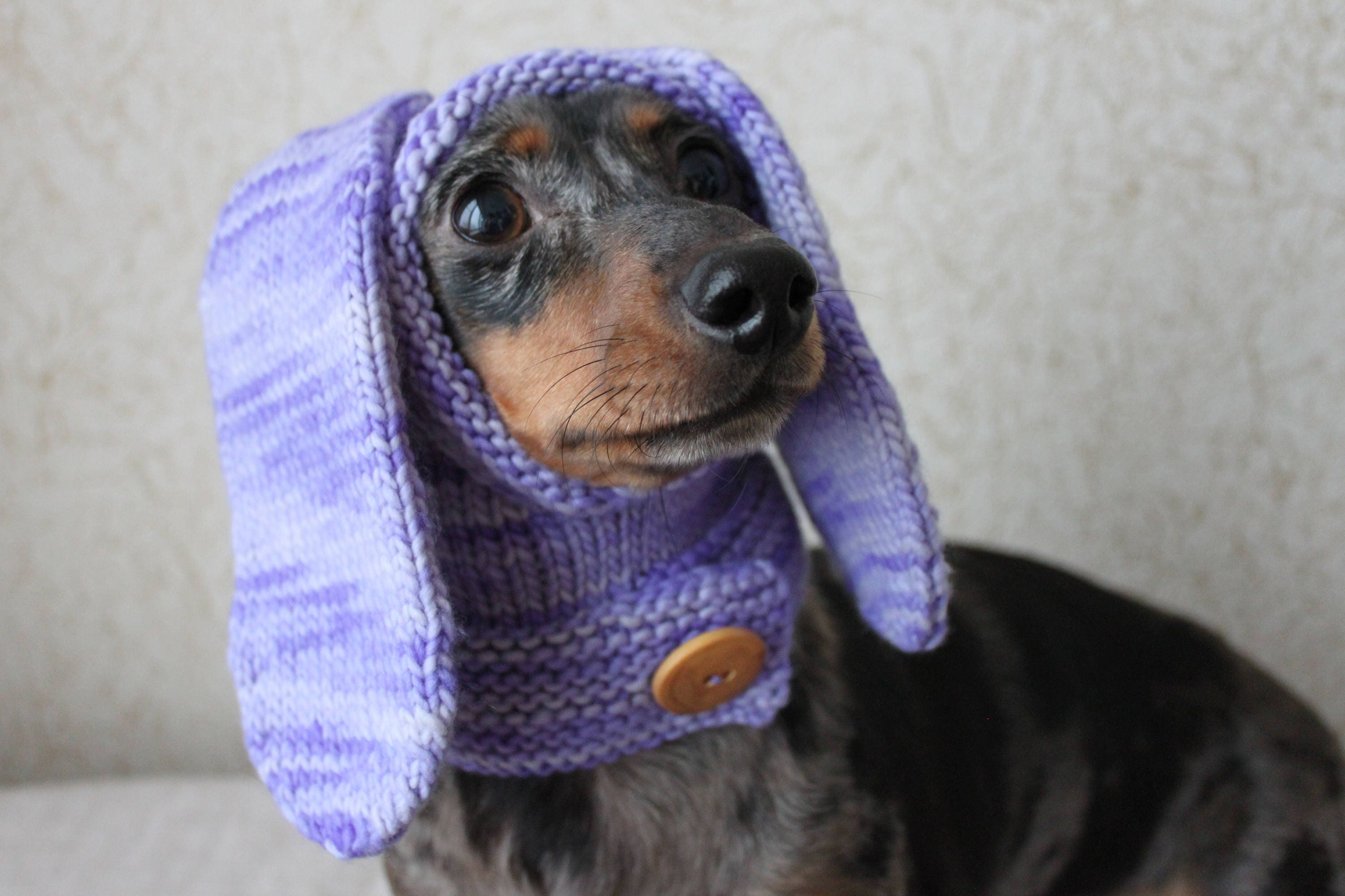 Knitting pattern rabbit hood mini dachshund hat dog hat zoom bankloansurffo Gallery