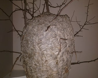 Unique Paper Hornet's Nest