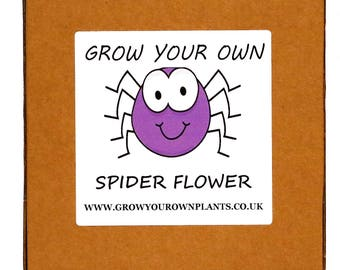Grow Your Own Cleome Spider Flowers Plant Kit