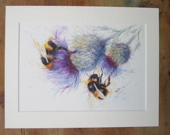 """Bees on thistle. Watercolour print. Printed directly onto watercolour paper. In a  14"""" x 11"""" mount."""