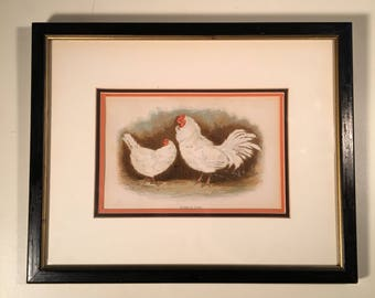 Framed Antique Chicken Print - Frizzled Fowl, Original Color Lithograph by William Dickes