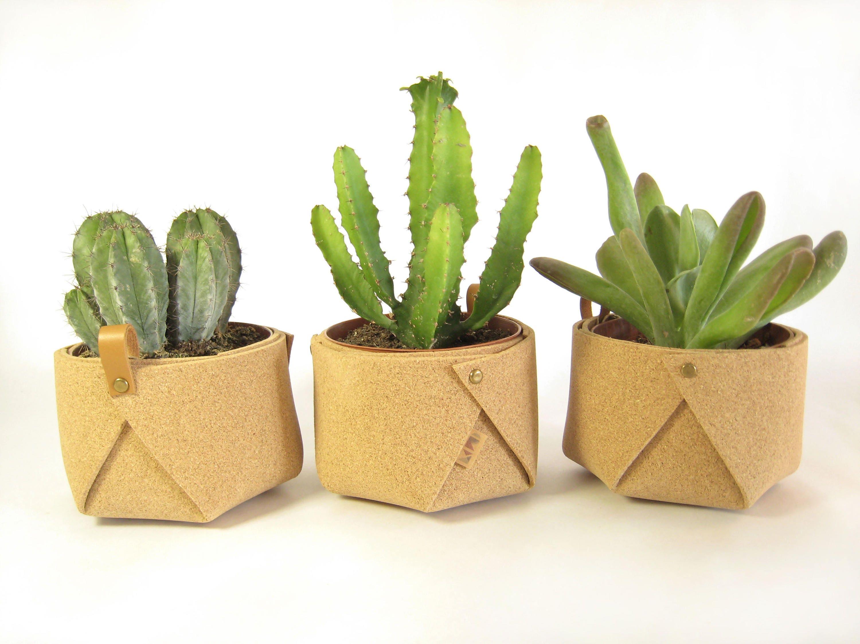 cache pot en li ge petit pot pour plantes grasses et cact es. Black Bedroom Furniture Sets. Home Design Ideas