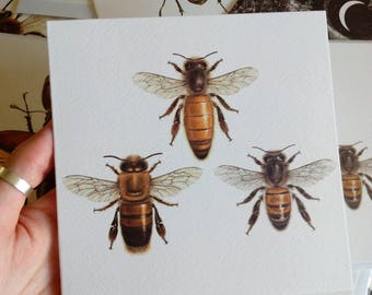 Greetings Card - Honey Bee, Apis mellifera, (Large)