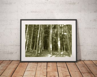 Woodland Photography Print,Tall Trees Tunnel Photography Print, Brown, Nature Decor, Rustic Art