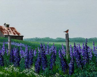 Old Barn in Field of Wild Lupines