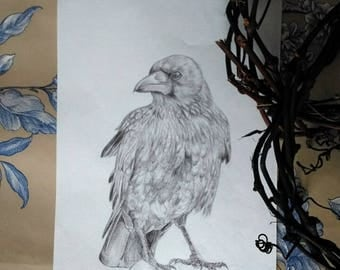 Crow - drawing pen, DIN A4 size original