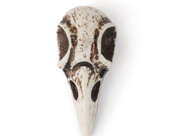 Large Raven Skull - Imitation Bone (STEAM309)