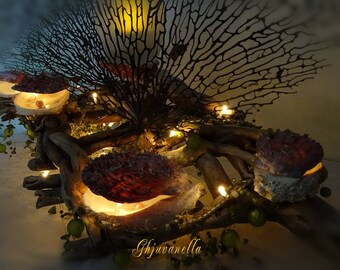 Made in Corsica, with its illuminated shells Driftwood root