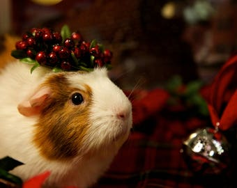 Silent Night Guinea Pig Holiday Greeting Card