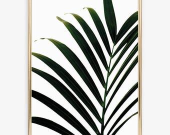 Poster, Print, Wallart, Skandinavian Design: Green Palm Leaf