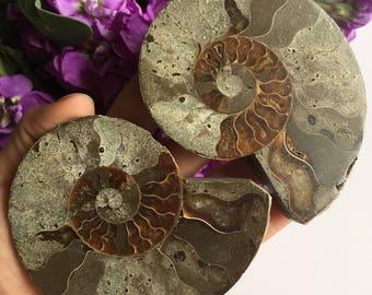 Ammonite Halves - Split - Pair