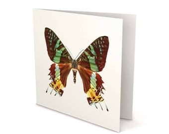 Butterfly 2 Greeting Card, Butterfly card, Butterfly, Butterfly Brown, Greeting Card, Square Card, Blank card