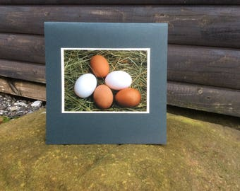 Clutch of eggs card, Easter card, Mother's Day card, birthday card, Thankyou card, blank card, just to say card,