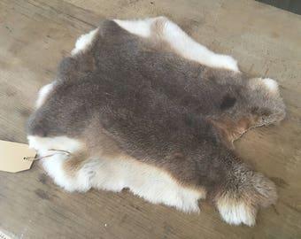 Superb rabbit fur hide