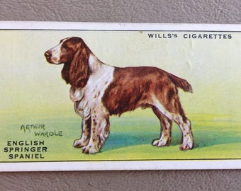 Vintage Springer Spaniel Dog Wills Cigarette Card UK c.1920