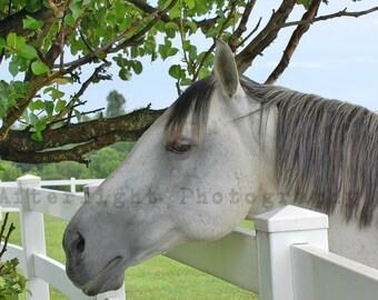 Horse Photograph, Horse Photography, Wall Art, Fine Art,
