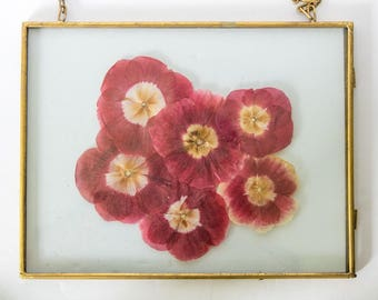 Gold floating frame filled with pressed anemones