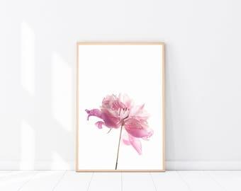 Pink Peony Photography, Botanical Art Poster, Botanical Photography, Pink Wall Art, Scandinavian Print, Botanical Print, Peonies Photograph