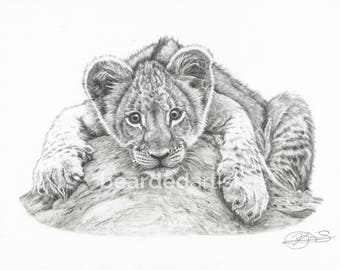"8.5x11"" OR 11x17"" Print of Baby Lion Cub"