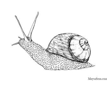 Snail - Art Print